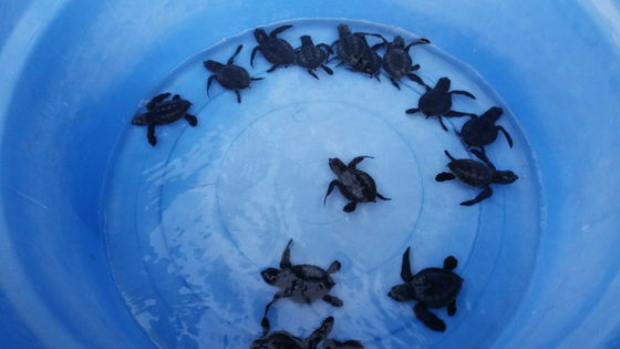 Mangrove Conservation and Turtle Care in Bali