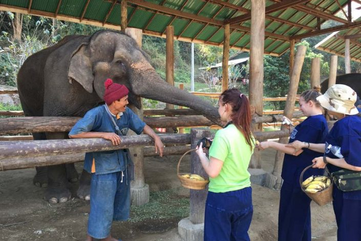 Elephant Care Centre in thailand
