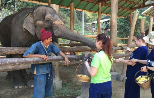 Hill Tribes and Elephant Care in Northern Thailand