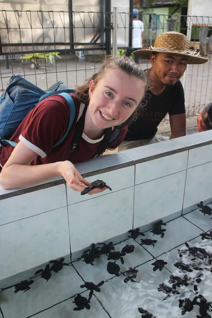 Releasing baby turtles with the Turtle Conservation Center in Bali3