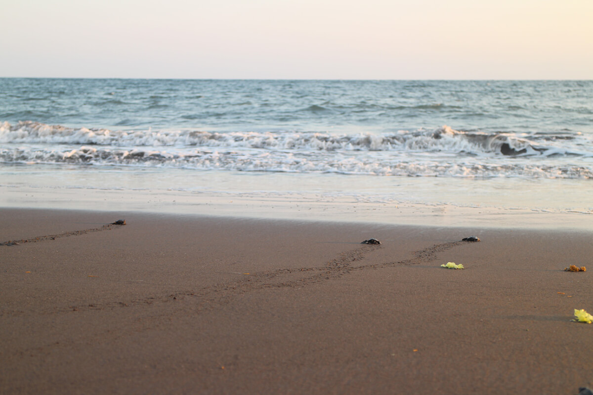 Releasing baby turtles with the Turtle Conservation Center in Bali6