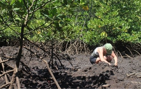 MANGROVE CONSERVATION IN BALI