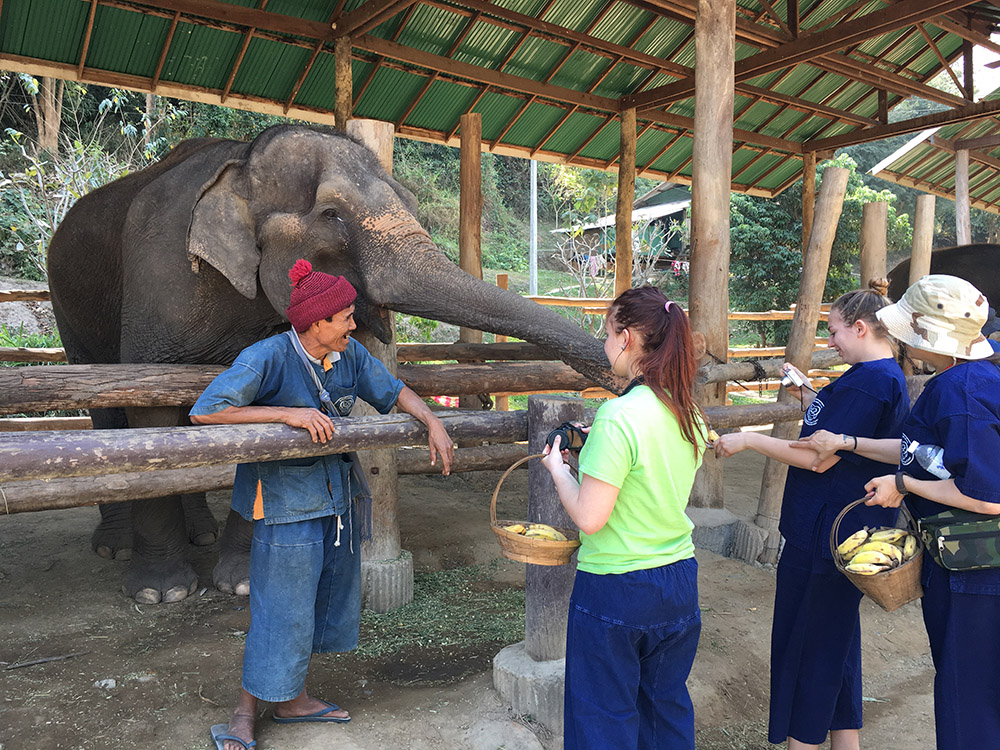 Hill Tribes & Elephant Care in Thailand